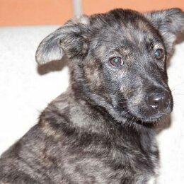 Собаки - Малютка Тиграша, 4 месяца, 0
