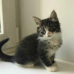 Кошки - Котенок Мартын очень хочет найти дом и любящих хозяев, 0