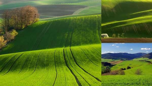 Природа Чехии: флора
