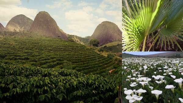 Природа Эфиопии: флора