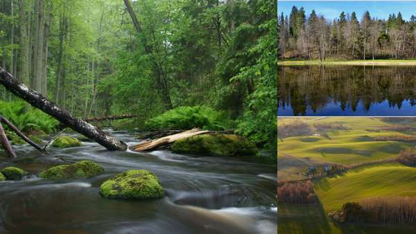 Фото природы Эстонии