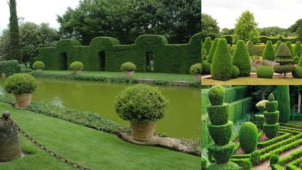 Фигурные кустарники в ландшафтном дизайне
