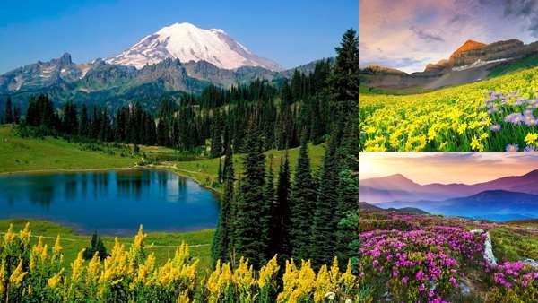 Летняя природа: горные цветы