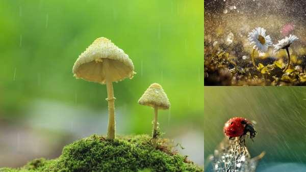 Фотографии природы: летний дождь