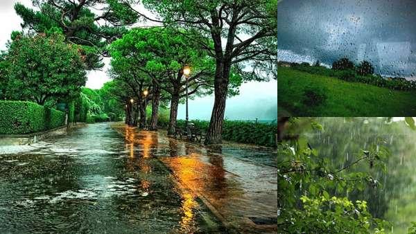Летняя природа: дождь