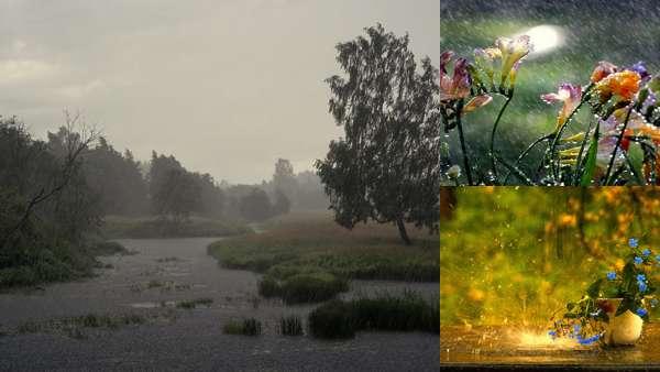 Фото природы: летний дождь