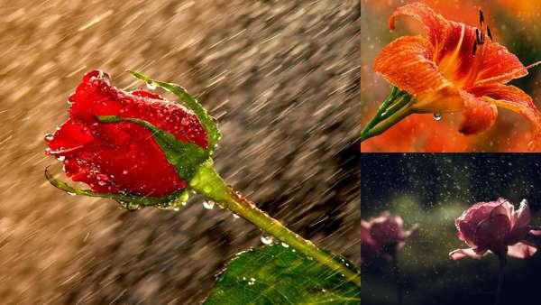 Фотографии природы: цветы под дождём