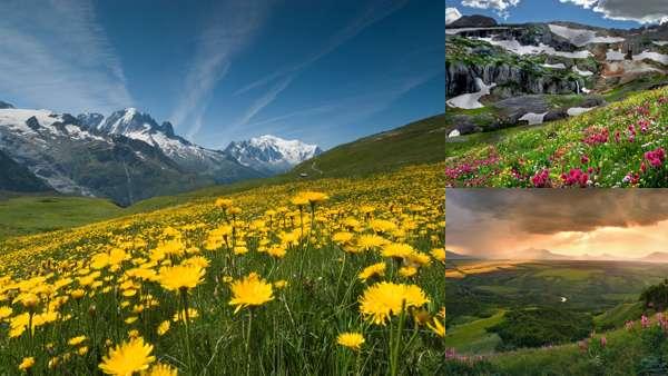 Цветущие горы Кавказа