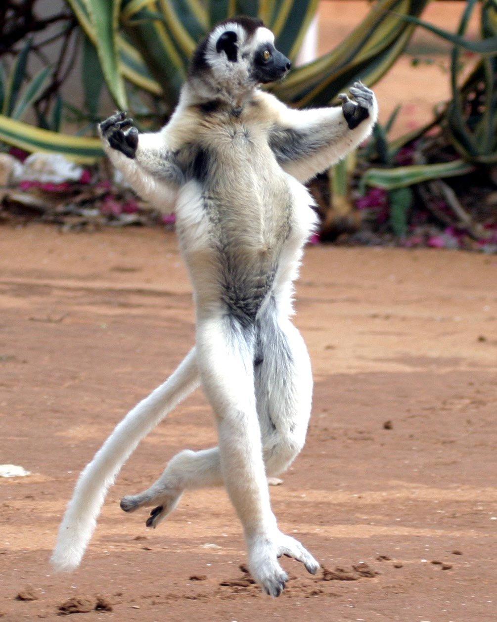 Танцульки прикольные картинки