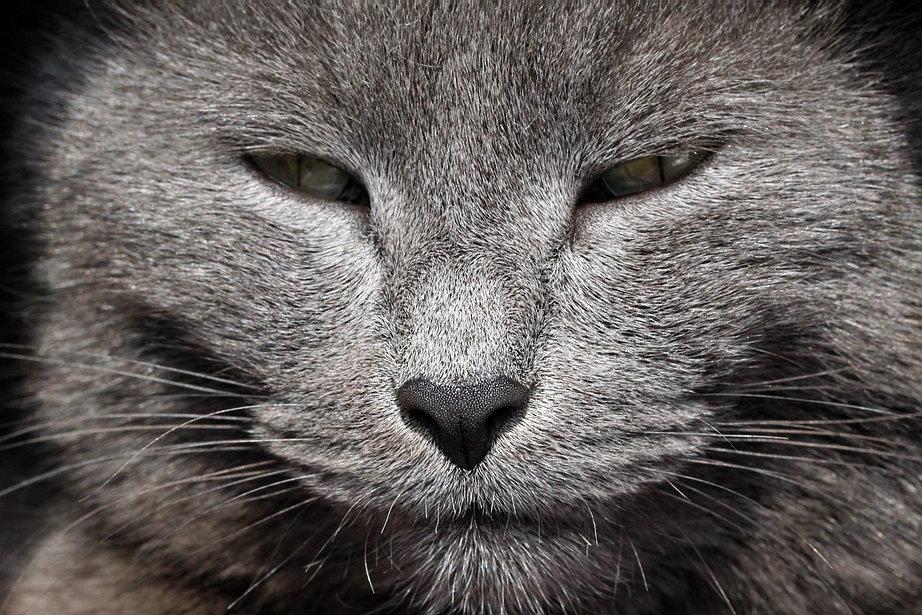 Картинки кота с ухмылкой