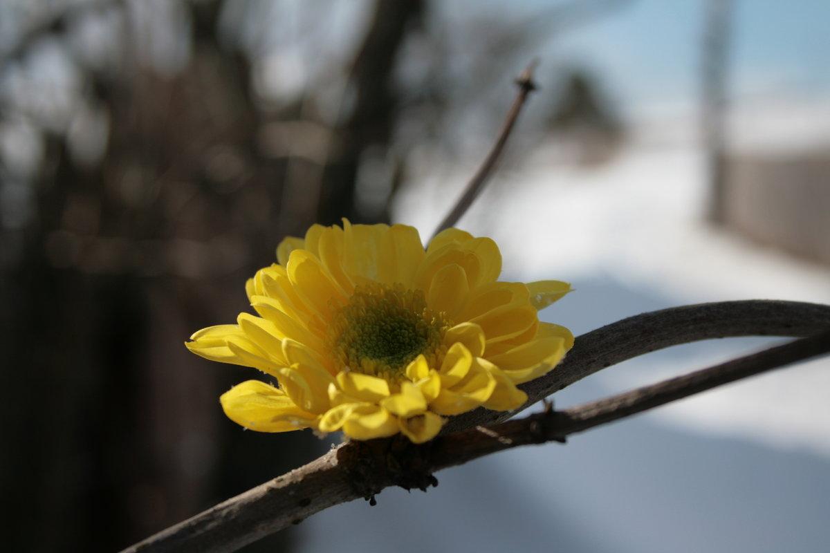 В ожидании весны картинки