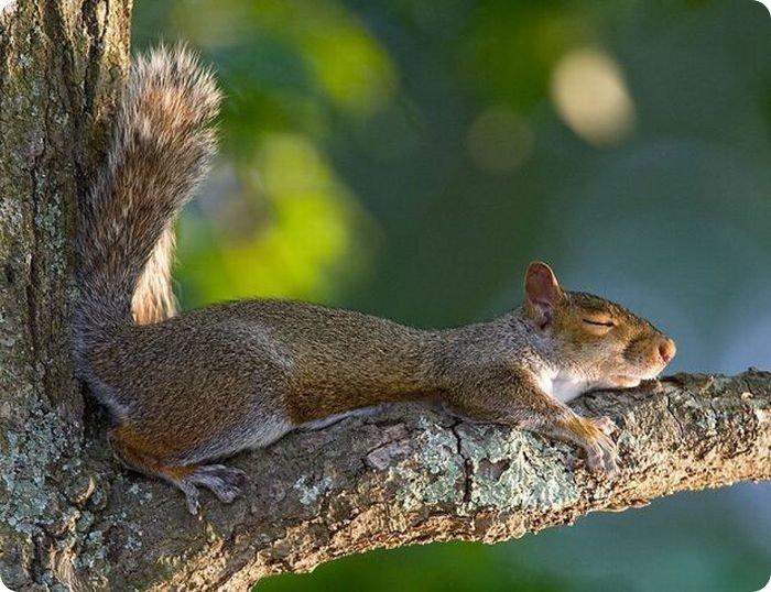 Картинки как спят животные, добрым утром анимация