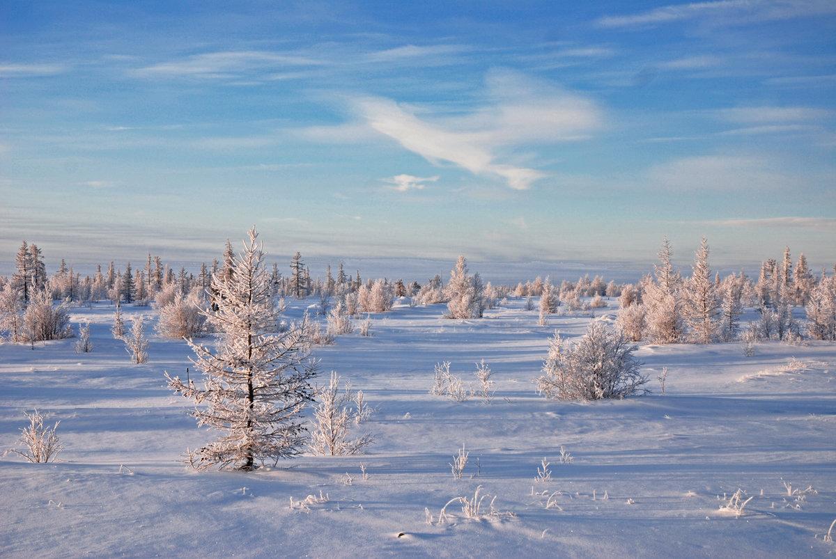 знаете, картинки к суровой зиме тундры приятных