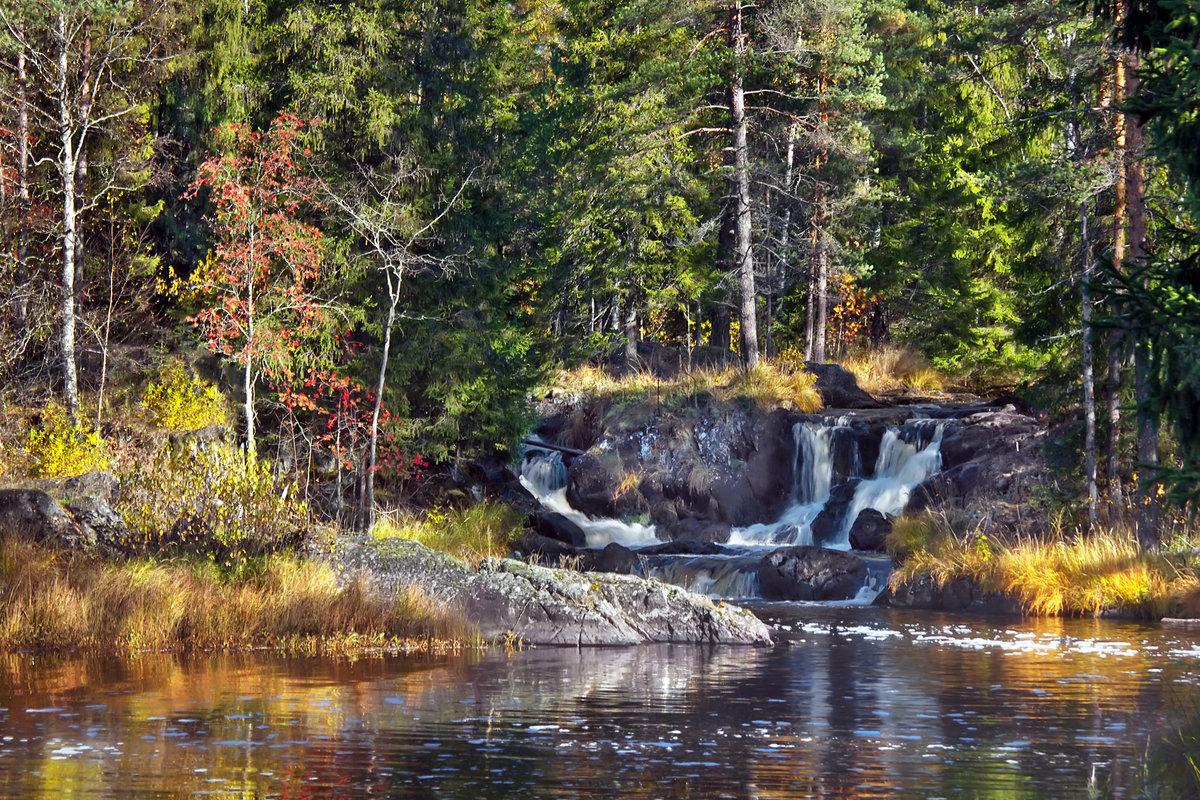 лес красивая карелия картинки хорошо разрастается, крупные