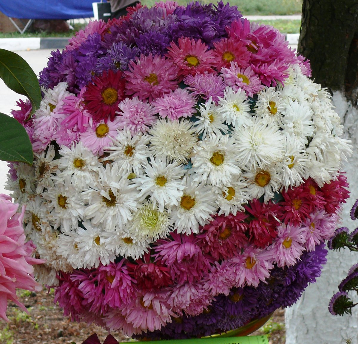 приколов смешных хризантема букет на праздники фото уверены, что