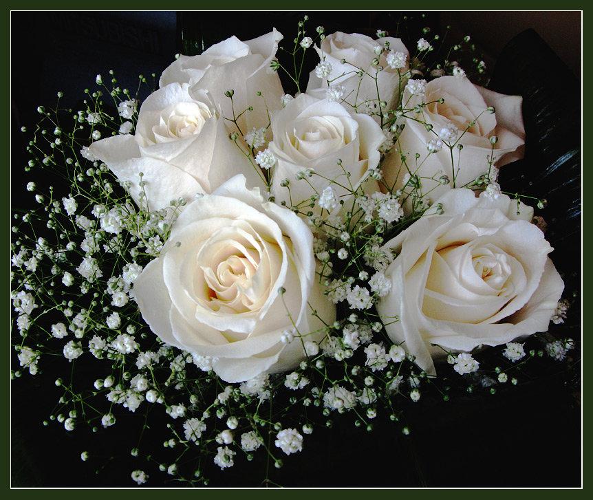 Николой чудотворцем, картинки белые розы поздравления