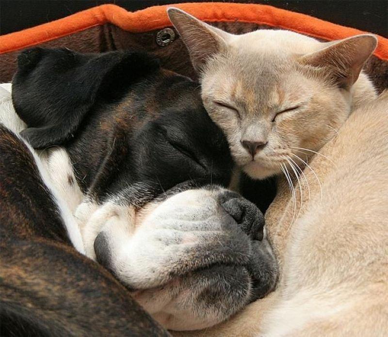Днем, прикольные животные картинки кошки и собаки