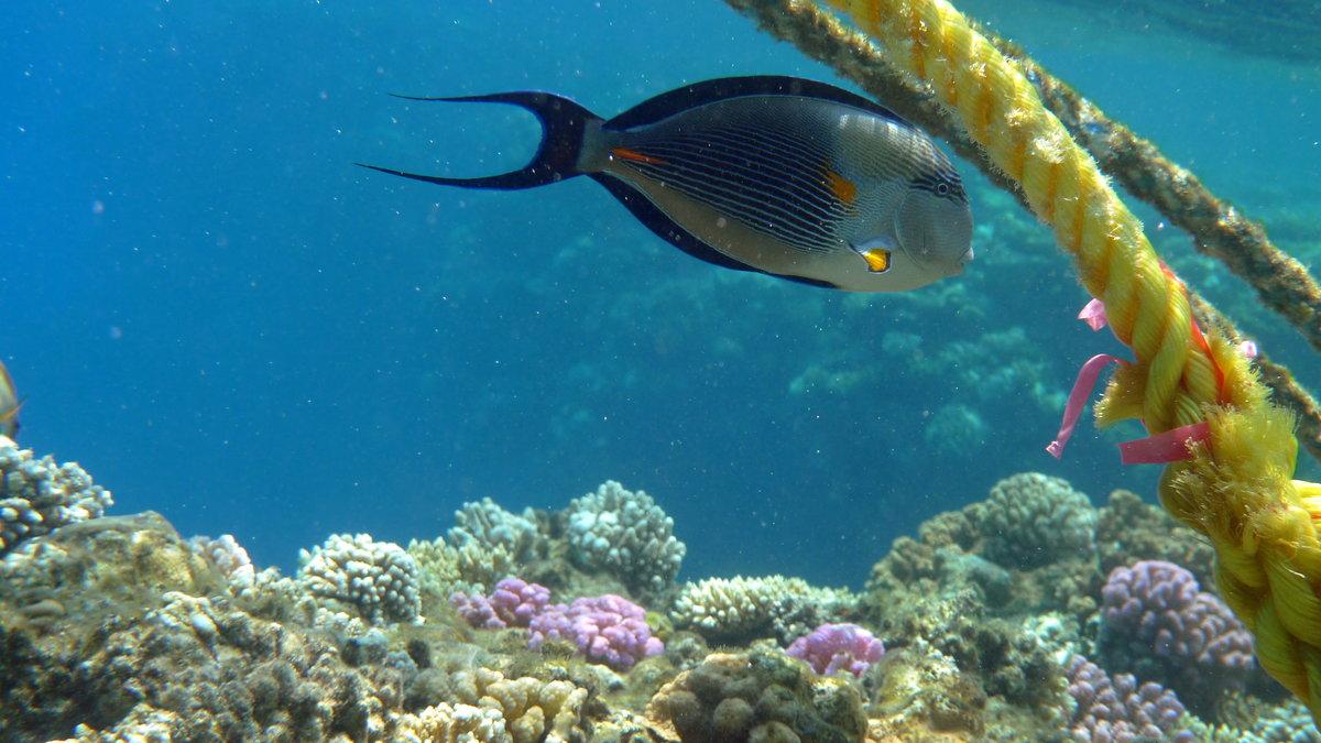 Рекордный экземпляр на кастинн-рыбалке: эти маленькие животные обладают мощным оружием, находящимся на их хвосте.