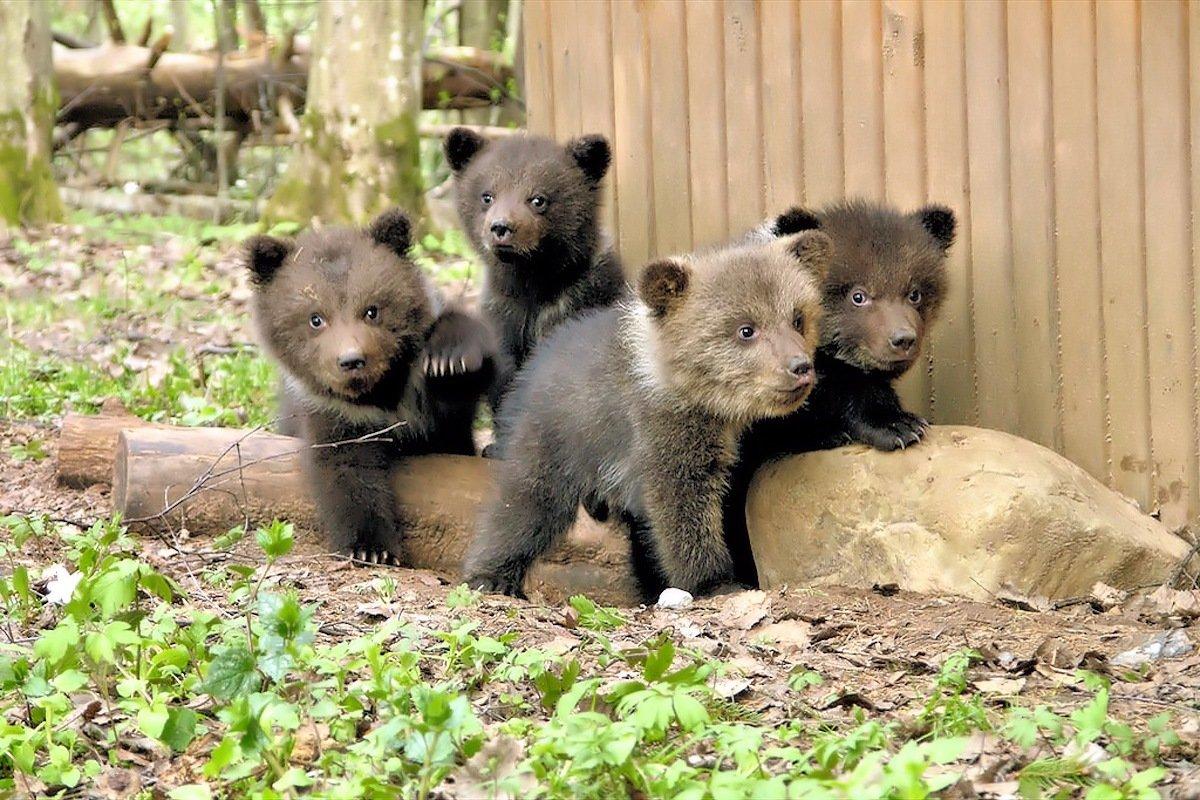 Картинки медвежата, рождением