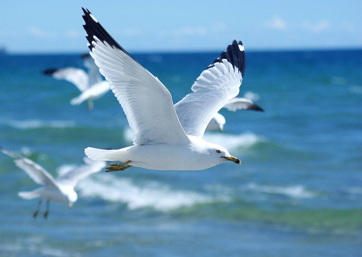 Картинки чайка над морем, поздравления двойней открытки