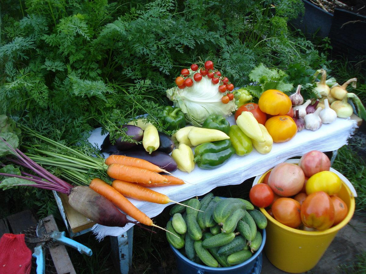 Овощи урожай картинка