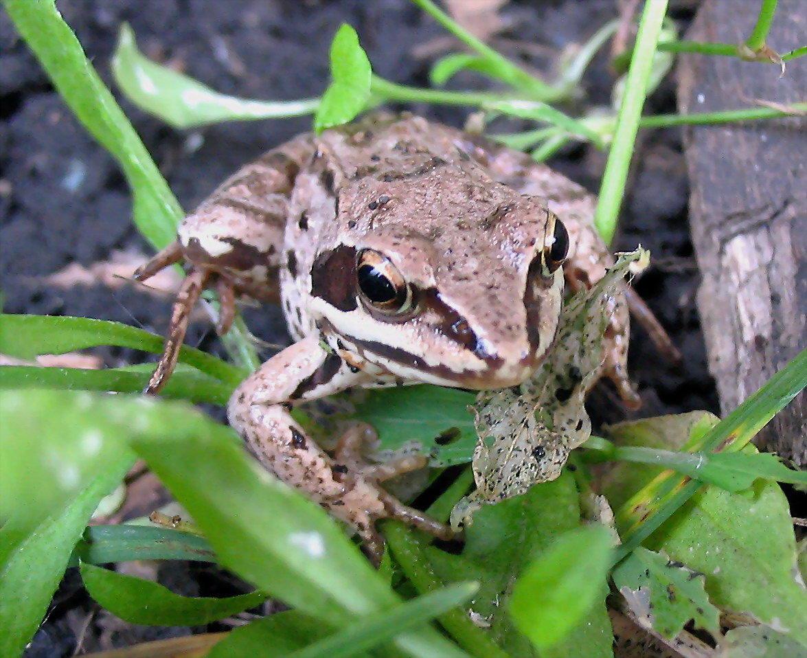 так виды жаб фото и названия эти радуги