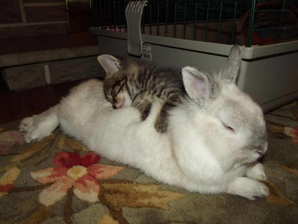 Как и у многих других домашних питомцев, у декоративных кроликов есть свой режим дня.