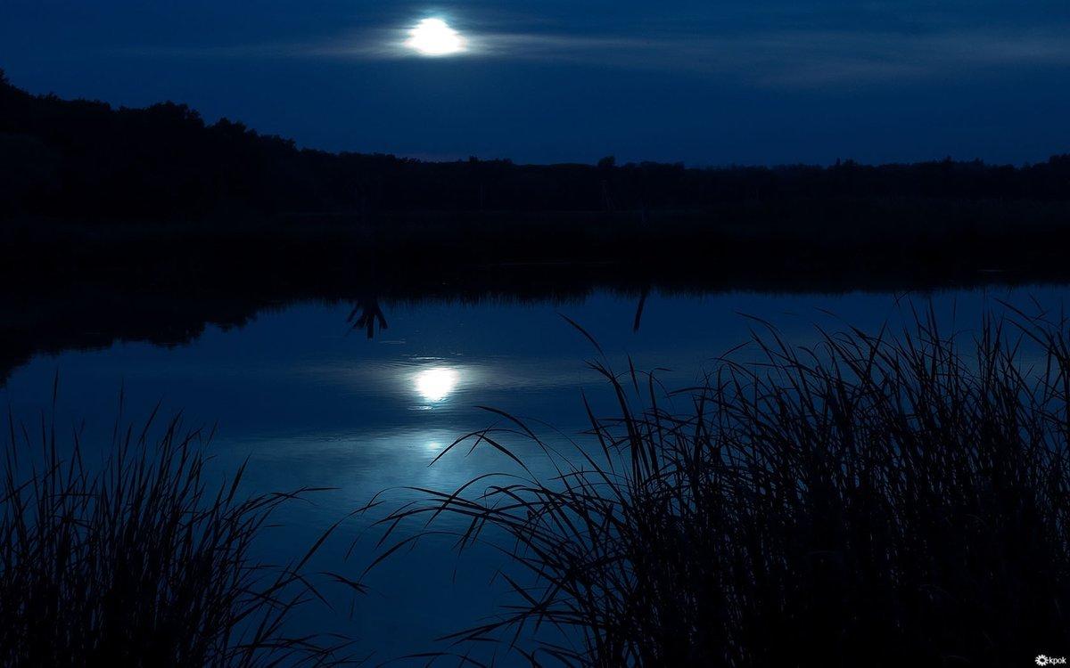 Лунная ночь фотографии грибнику