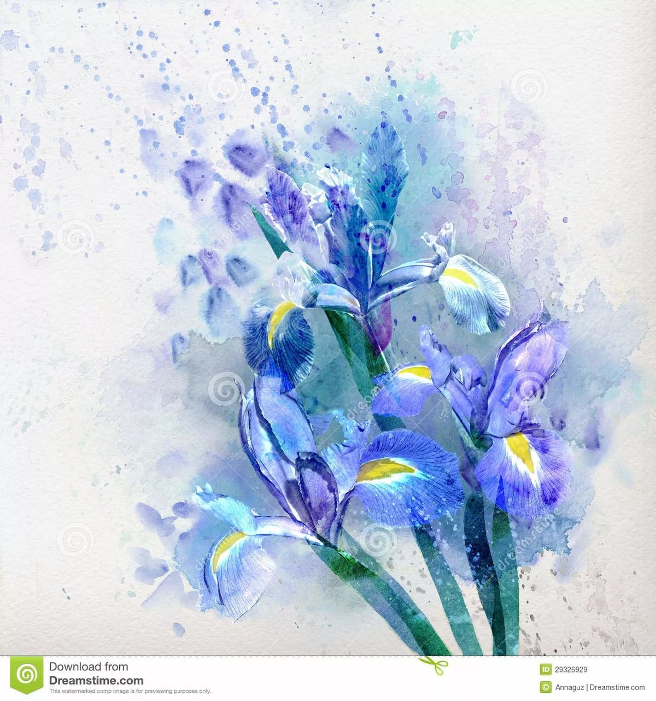 Iris Flower Watercolor Painting Stock Illustration Image Dar Card