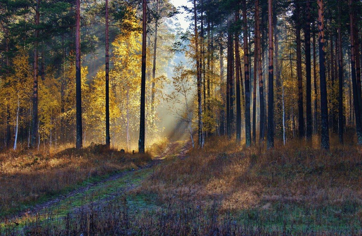 Портал в настоящий мир.#безмятежность #конкурс #октябрь #осень #пейзаж #урал