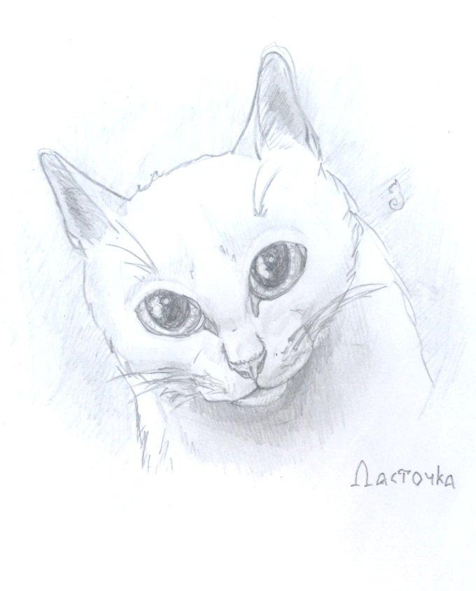 Рисунки карандашом коты воители для срисовки, корабля для