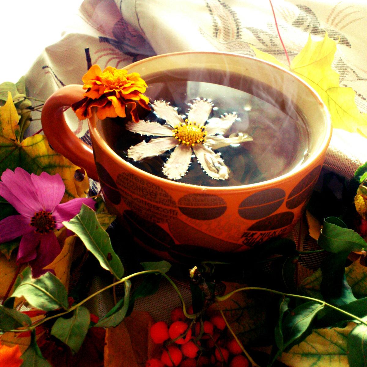 Картинки чай цветы осень систему