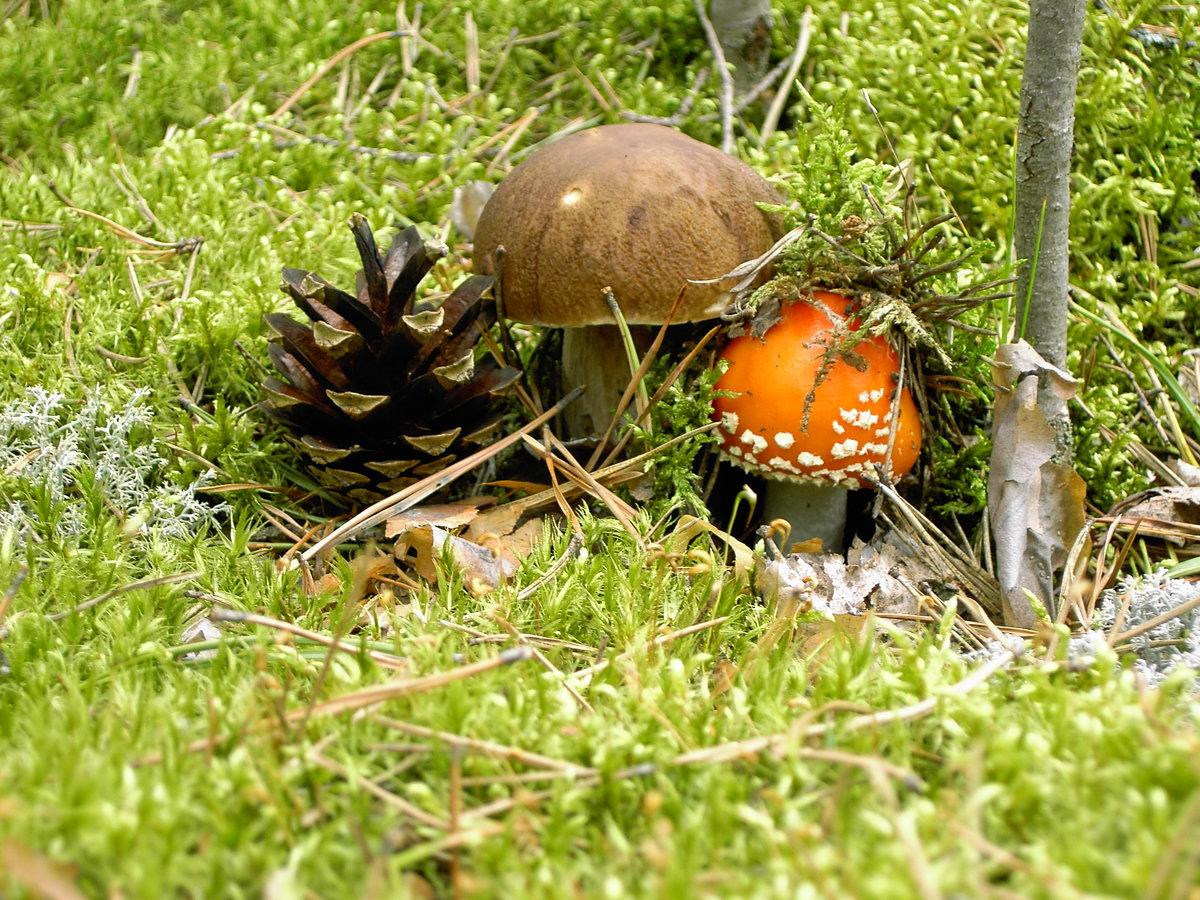 Осень пора грибная картинки