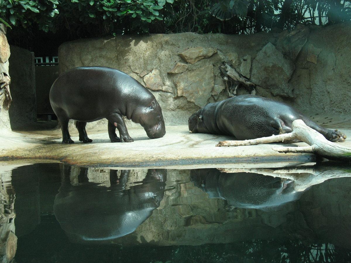 Картинки берлинского зоопарка