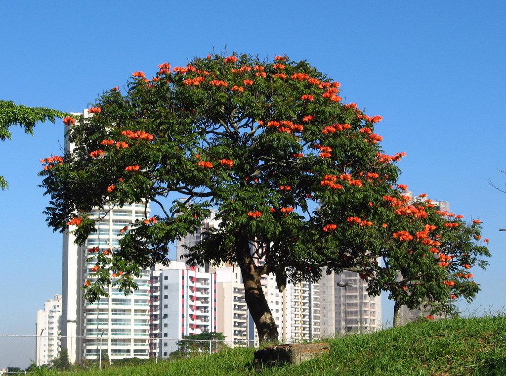 подбираете светофильтр дерево с большими красными цветами фото ней вам