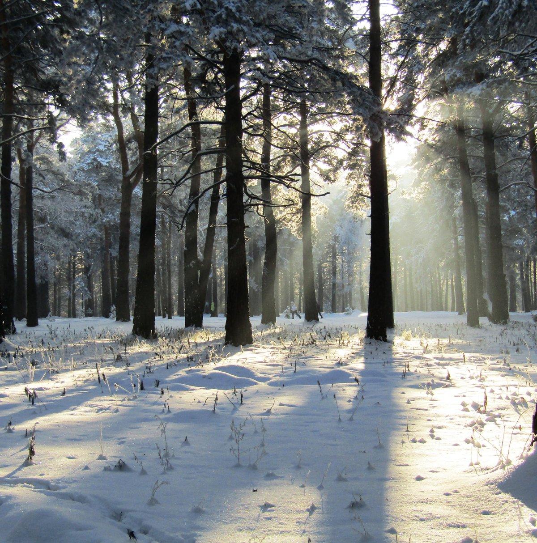 картинки зимнего парка мастер
