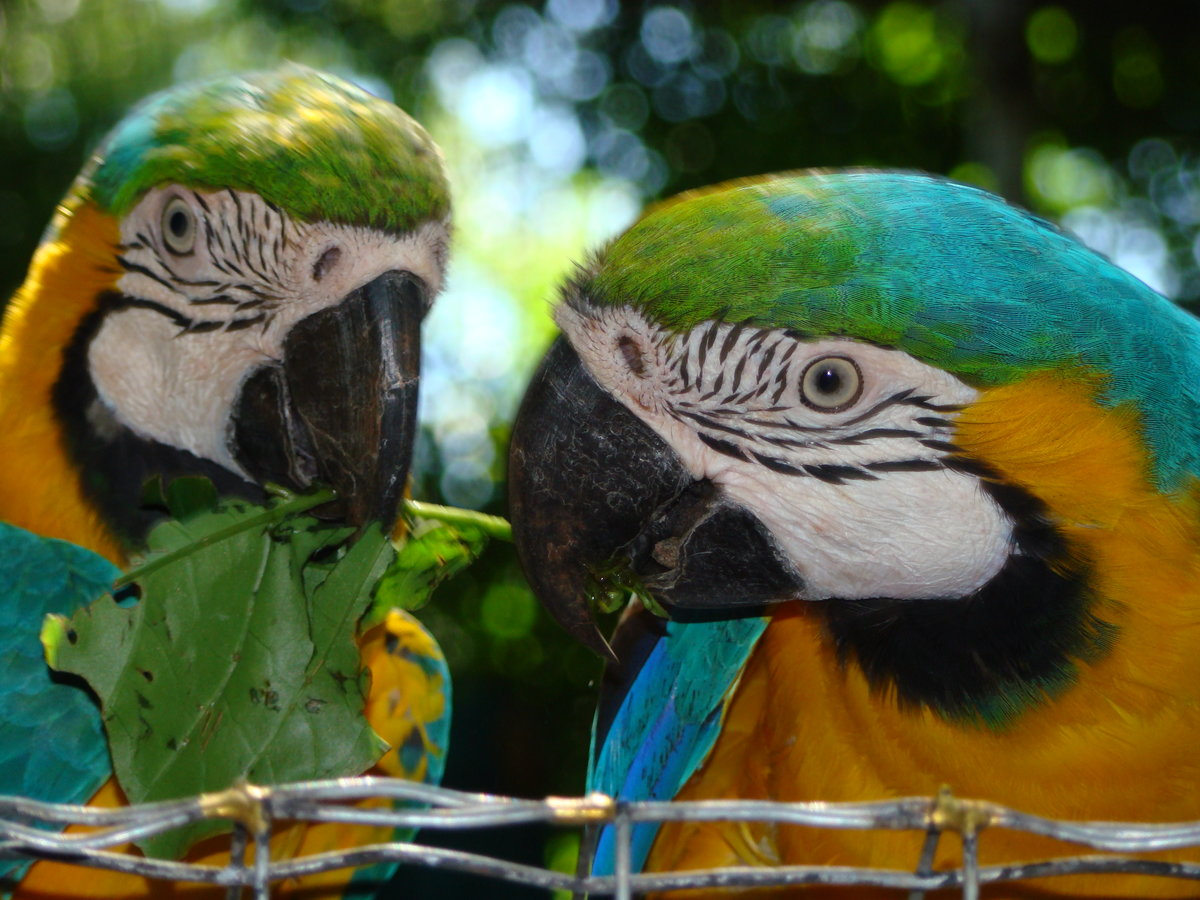 Картинки попугаев в рио