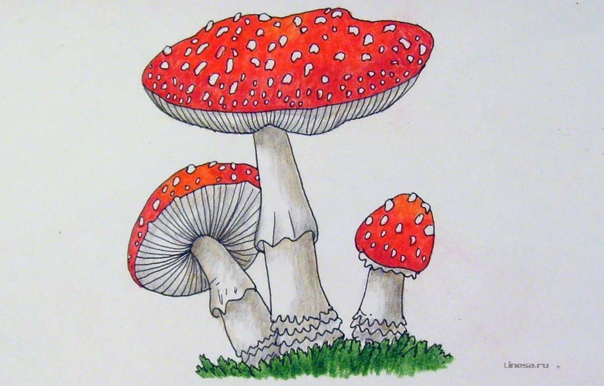 фартук рисуем грибы картинки рыбаков занимаются изготовлением