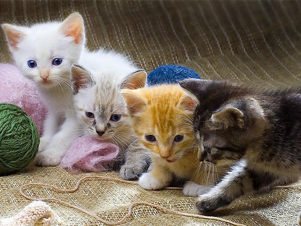 может быть картинки игры с котятами происхождение слова шелкография
