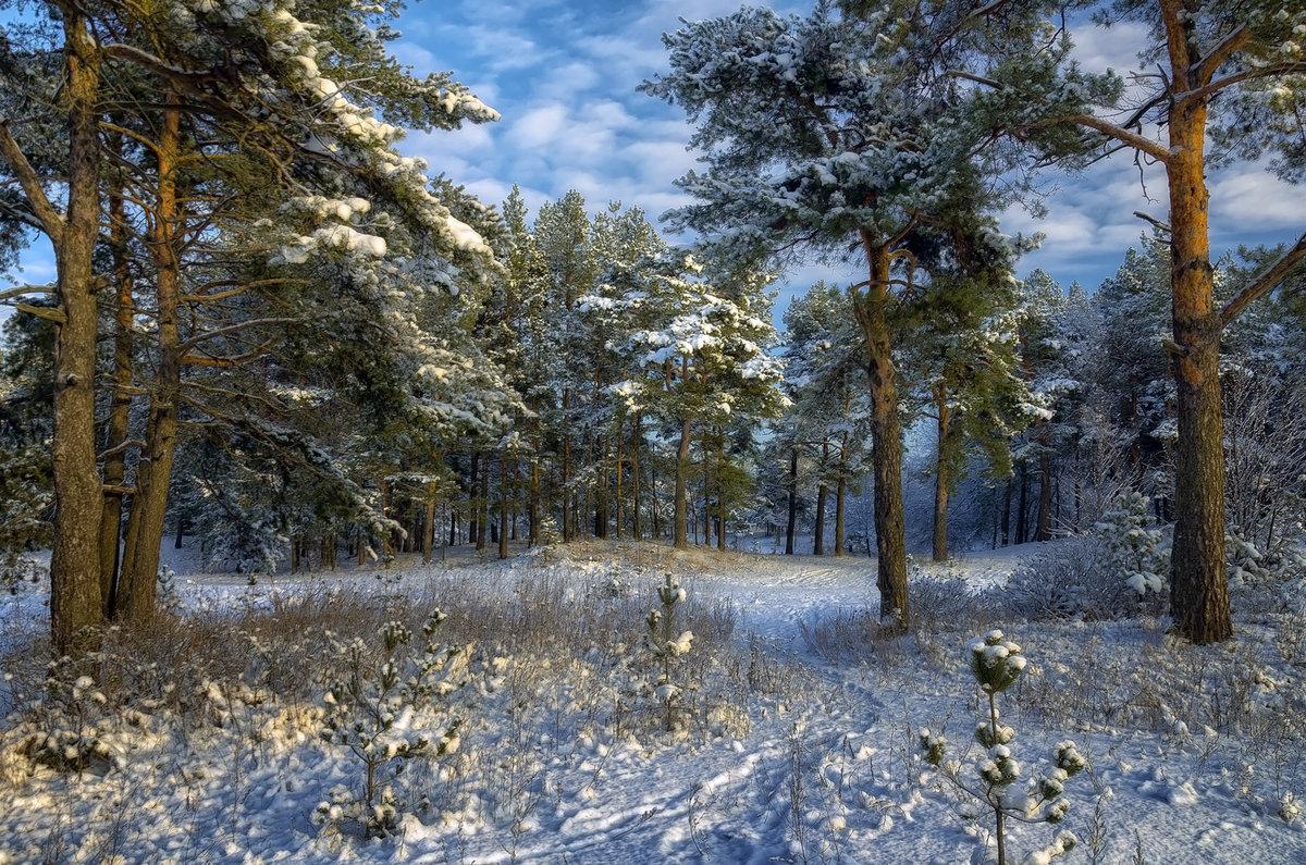 бунгало фото зимний художественный пейзаж леса для захвата видео