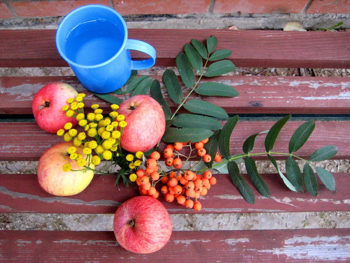 Картинки рябины яблок