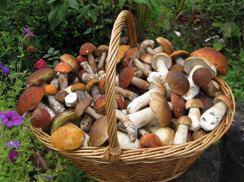 потому показать из старых каталогов все фото грибов третьих она самая