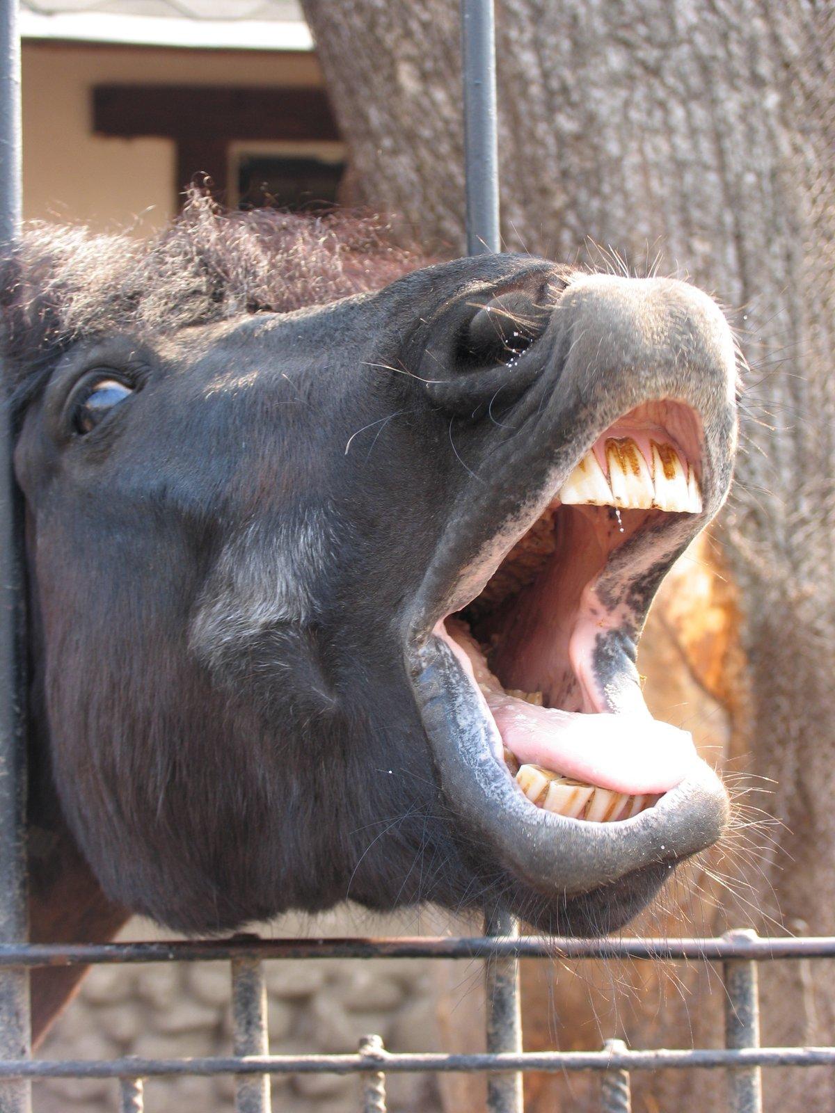 Открытки годовщиной, смешные картинки из зоопарка