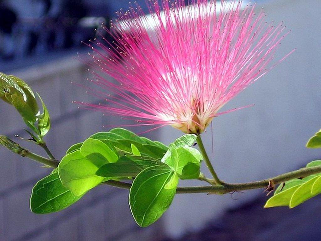 картинка удивительного цветка что делать