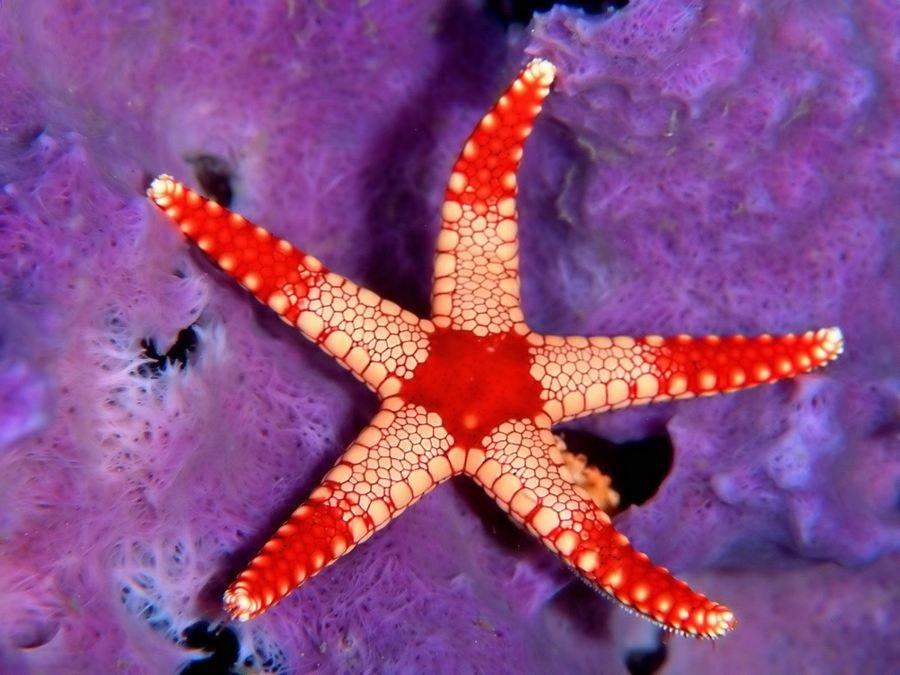 Картинка морской звезды, высказывания картинках