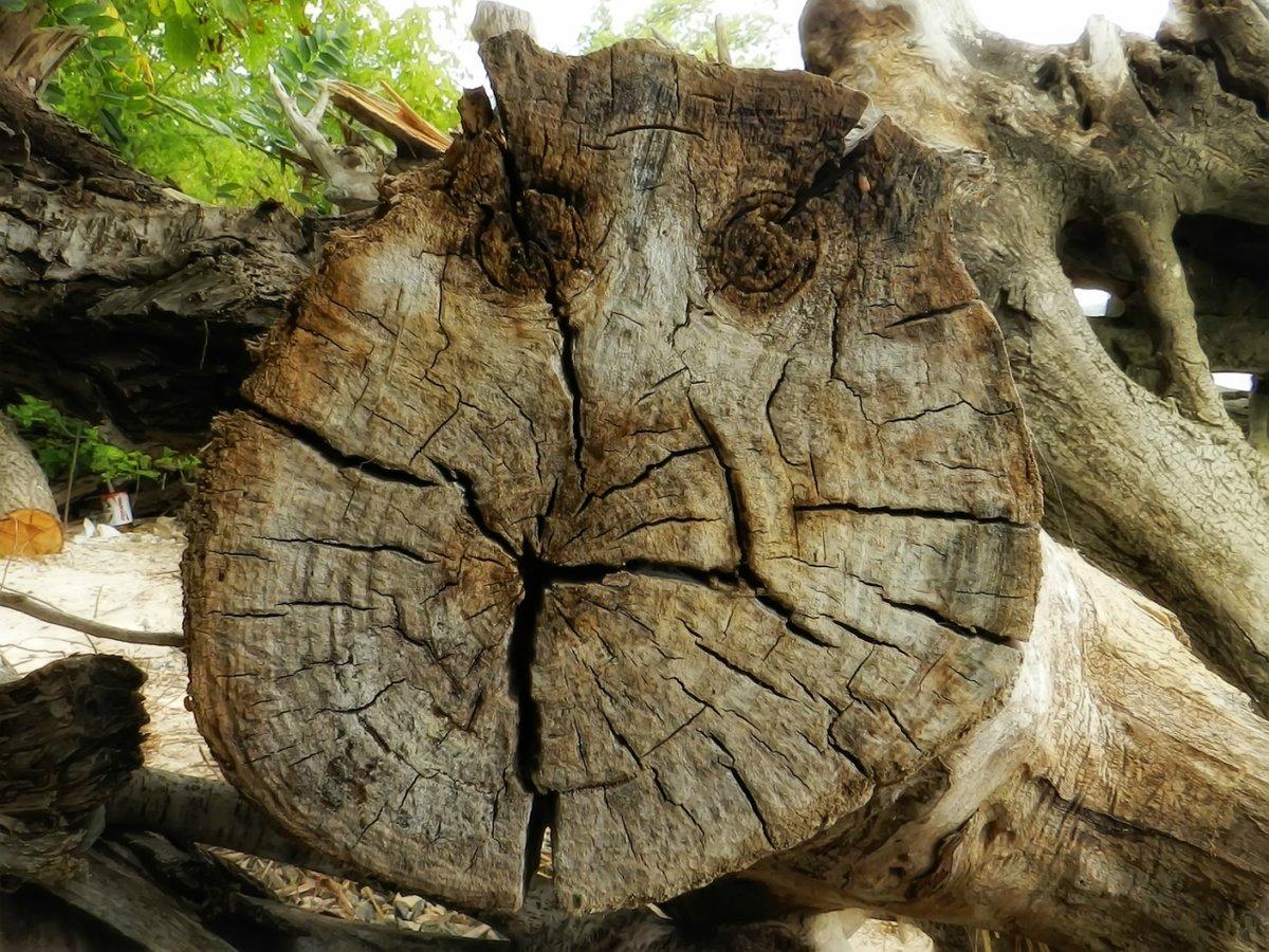 Ну пришли хотя бы смайлик...#взгляд #дерево #пень #смайлик #юмор