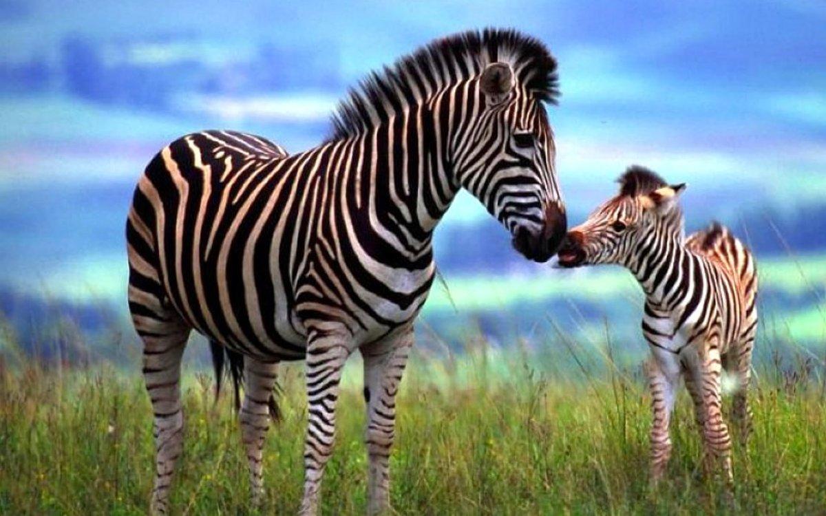 Животные с детенышами картинки для детей, возвращением домой