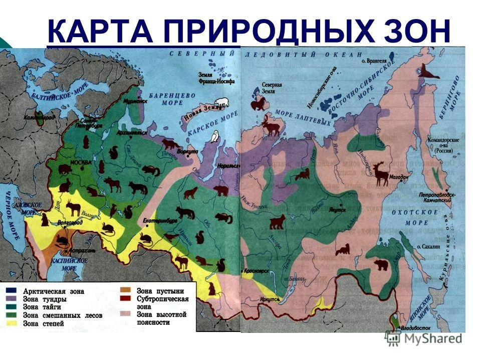 природный зоны россии замечает