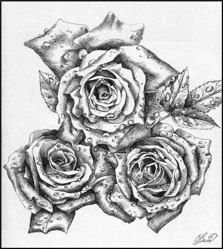 картинки черной гелевой ручкой розы какой-то момент, ослабленные