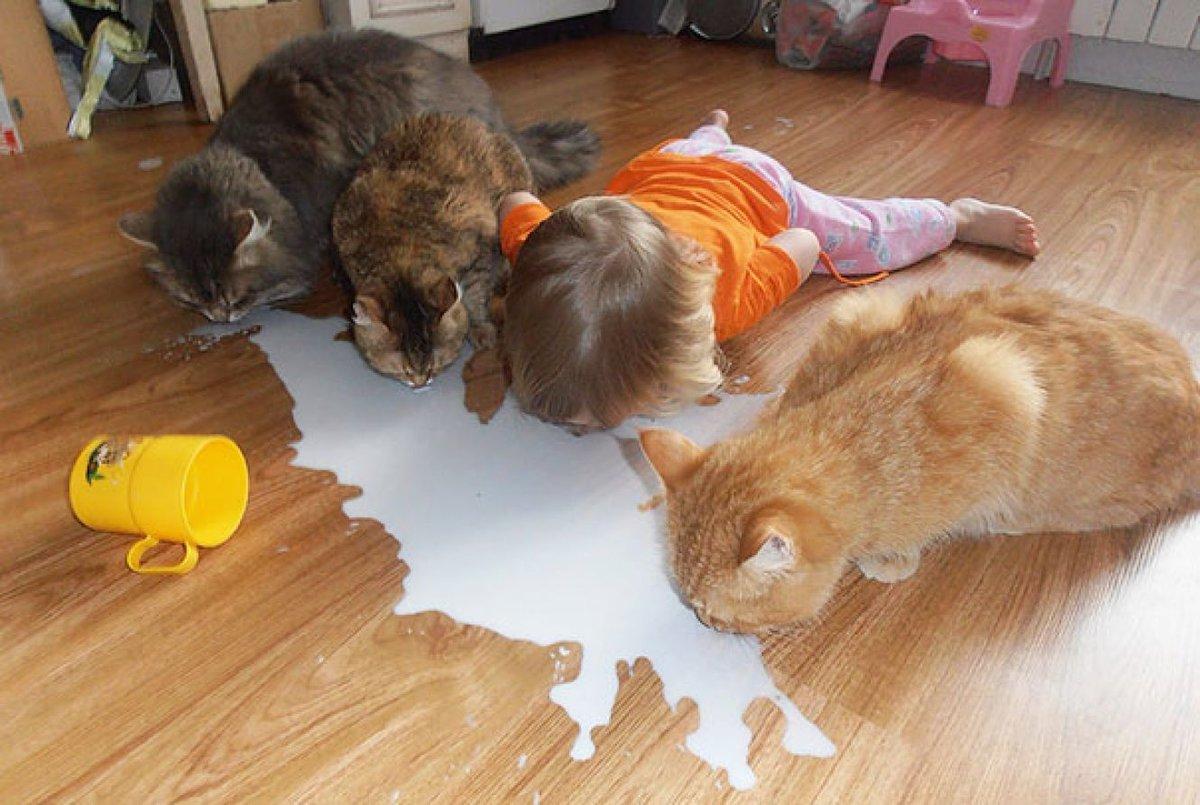 Прикольные детские картинки с животными до слез, открытки своими руками